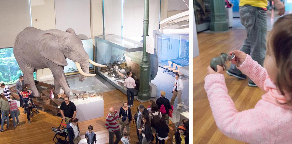 Elefante en Museo de ciencias naturales